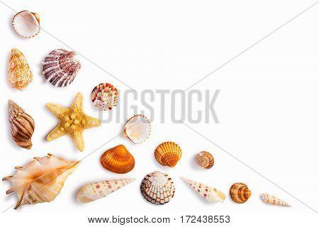 Frame with seashells isolated on white background