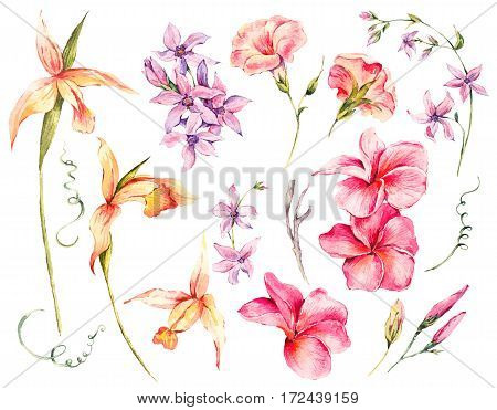 Watercolor set of vintage floral tropical natural elements. Exotic flowers, twigs and leaves. Botanical bright classic collection isolated on white background.