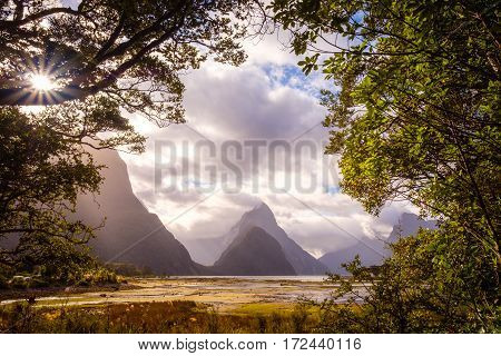 Landscape View Of Milford Sound Framed In Trees, New Zealand