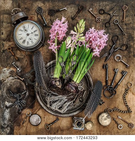 Vintage still life with hyacinth flowers. Old keys clock scissors on rustic wooden background