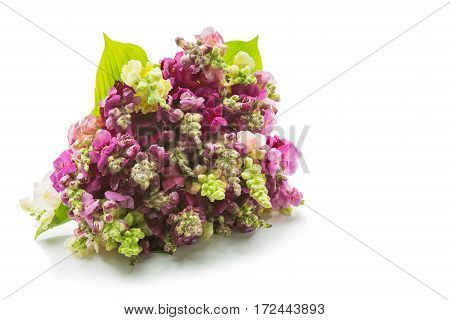 Beautiful pink delphinium flower lying on white background. Isolated. Copy space.