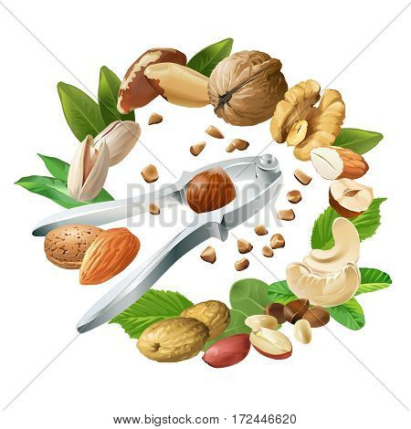 Vector illustration of nutcracker and nuts - cashews, walnuts, almonds, pine nuts, hazelnuts, brazil nuts peanuts pistachio