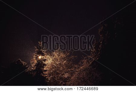 Abstract composition of light trees and snow during night.