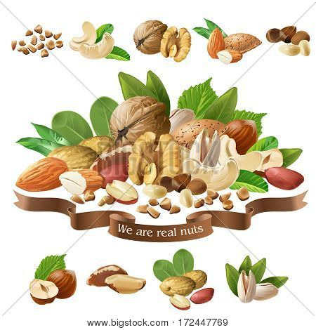 Vector illustration of a mix of different types of nuts on a white background