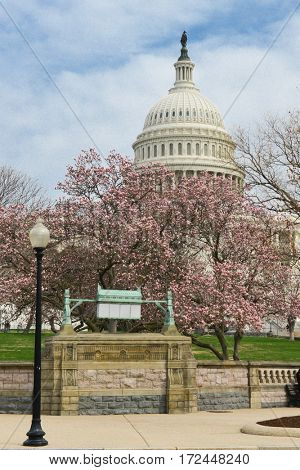 Washington DC in spring - The Capitol and spring blossoms