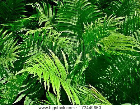 Picture of ferns taken during the day