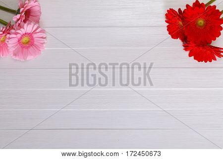 Gerbera flowers on white wood vintage background. 8 march or Valentines day love design. Fresh natural flowers. Painted wooden planks.