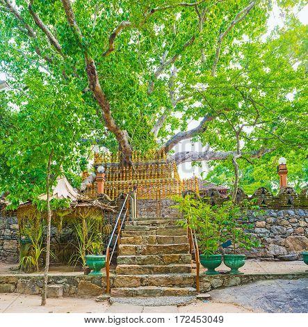 Panorama Of Bodhi Tree In Padeniya