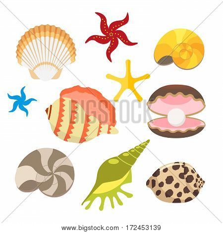 Set of sea shells, oysters with pearls and sea stars, snails. Vector, illustration in flat style isolated on white background EPS10