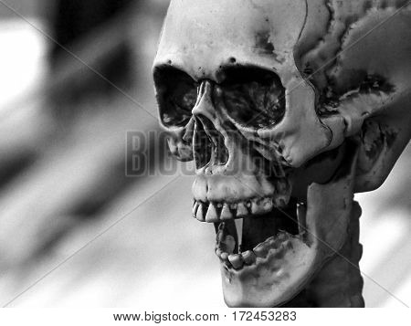 A black and white image of a plastic Halloween skull decoration.
