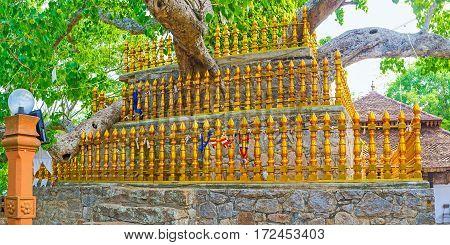 The Sacred Fig In Padeniya Temple