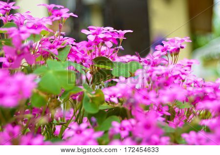 Beautiful pink flowers in a garden of grass