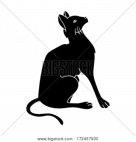 Siamese icon in black design isolated on white background. Cat breeds symbol stock vector illustration.