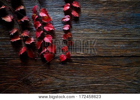 Autumn fall red leaves on wood background