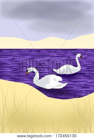 Two white swans swimming in a purple sea.