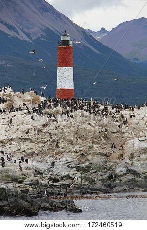 A colony of King Cormorants (Phalacrocorax atriceps) nests on Bird Island next to the lighthouse near the Port of Ushuaia in Terra del Fuego Province Argentina