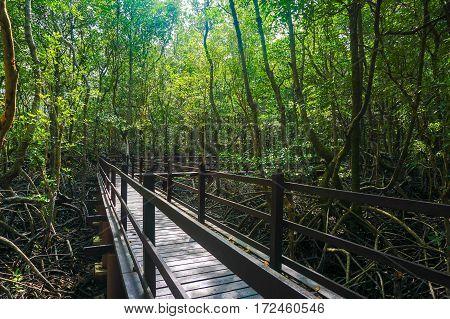 Wooden bridge in flooded rain forest jungle of mangrove trees in Kinabenua river,Labuan Pearl Of Borneo,Malaysia