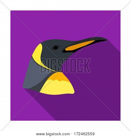 Penguin icon in flat design isolated on white background. Realistic animals symbol stock vector illustration.