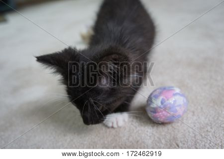 Picture of a black and white kitten