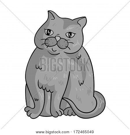 Exotic Shorthair icon in monochrome design isolated on white background. Cat breeds symbol stock vector illustration.