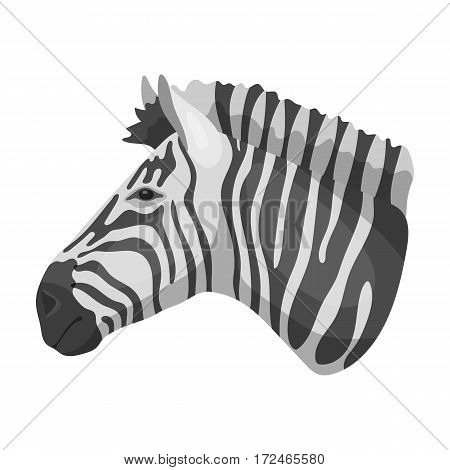 Zebra icon in monochrome design isolated on white background. Realistic animals symbol stock vector illustration.