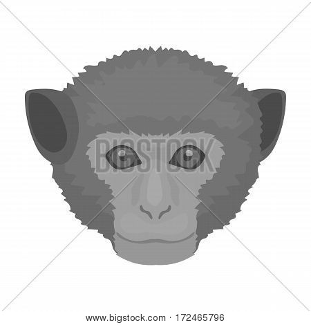 Monkey icon in monochrome design isolated on white background. Realistic animals symbol stock vector illustration.