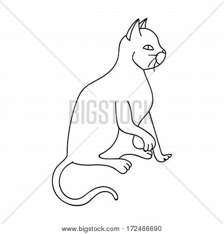 American Shorthair icon in outline design isolated on white background. Cat breeds symbol stock vector illustration.