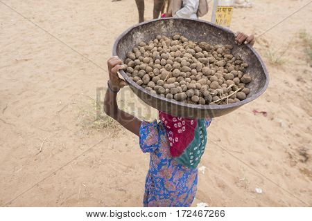 snap shot of indian girl carry pan dung of camels on head