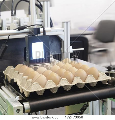 Industrial eggs packaging line