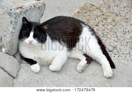 Cat Rest On Street