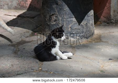 Stray Cat On Street
