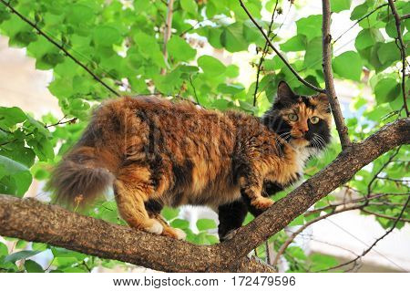 Stray Cat On Tree