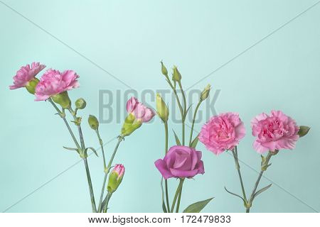 Tender pink carnation flowers and buds on a light blue background with copy space