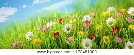 Spring flower in the meadow,spring nature background