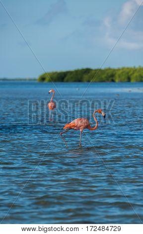 Flamingoes At Rio Lagartos Biosphere Reserve, Yucatan, Mexico