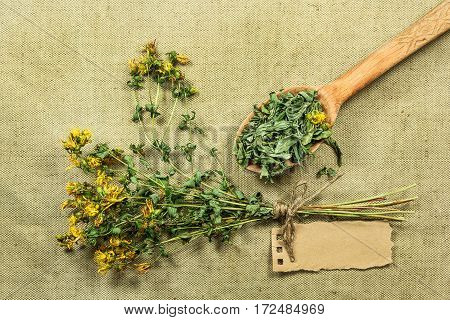 Tutsan. Dried herbs for use in alternative medicine spa herbal cosmetics herbal medicine preparing infusions decoctions tinctures powders ointments butter tea bath.
