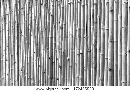 bamboo wall on black and white background