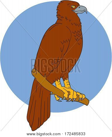 Drawing sketch style illustration of an Australian wedge-tailed eagle or bunjil Aquila audax sometimes known as the eaglehawk the largest bird of prey in Australia perced on a branch viewed from the side set inside circle.