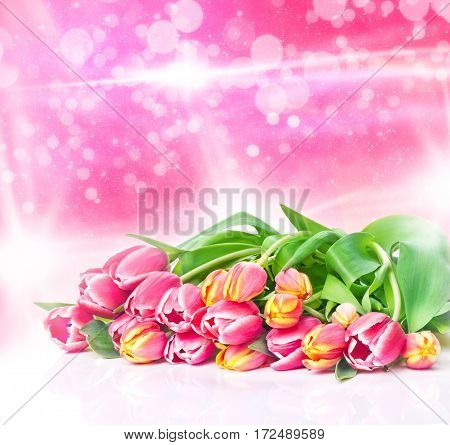 Pink and yellow tulpem with bright bokeh background