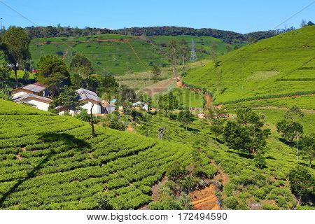 Beautiful mountain landscape with tea plantation in Sri Lanka, HDR image