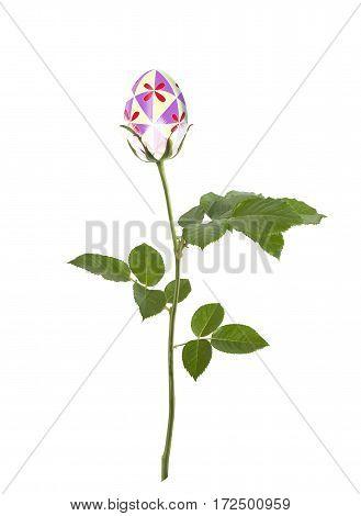 Beautiful Easter egg with ornament in the shape of flower on awhite background isolated