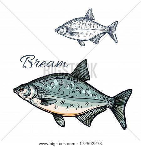 Bream sketch vector fish. Freshwater marine fish species of sea porgy or pomfret. Isolated symbol for seafood restaurant sign or emblem, fishing sport club or fishery industry, fish market or shop