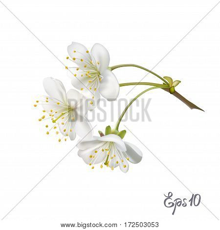 Realistic vector tree branch with flowers isolated on white background close up. Photo-realistic mesh vector illustration.