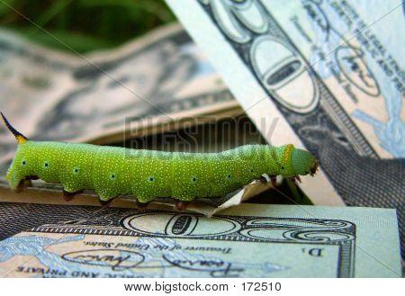 Money Grubber 2231