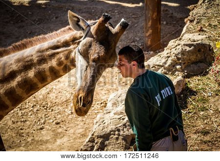 JERUSALEM ISRAEL - JANUARY 23: Giraffe and man in Biblical Zoo in Jerusalem Israel on January 23 2017