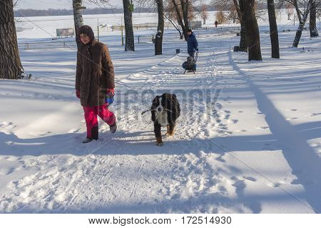 DNEPR UKRAINE - JANUARY 08 2017:Woman with big dog (Sennenhund Berne) walking in snowy winter park in Dnepr city at January 08,2017