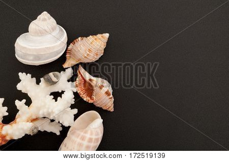 Sea background. Sea shells and corals on a black background with free place for text. Top view