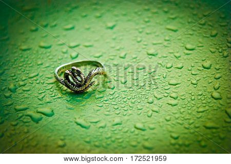 Ring snake on a wet, green, metal background, drop of water