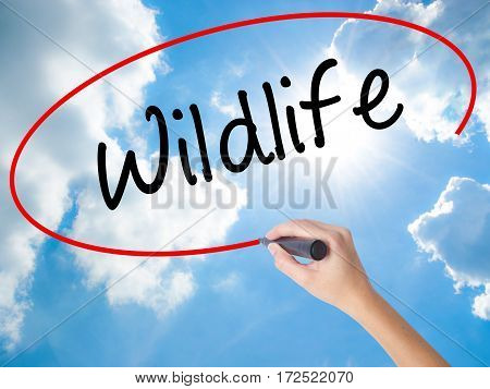 Woman Hand Writing Wildlife  With Black Marker On Visual Screen