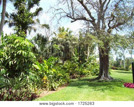 Stock Bermuda Bot Gardens 021
